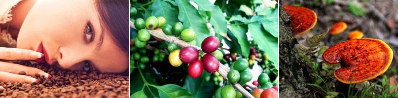 Thành phần & hướng dẫn sử dụng Bio Reishi Coffee Unicity